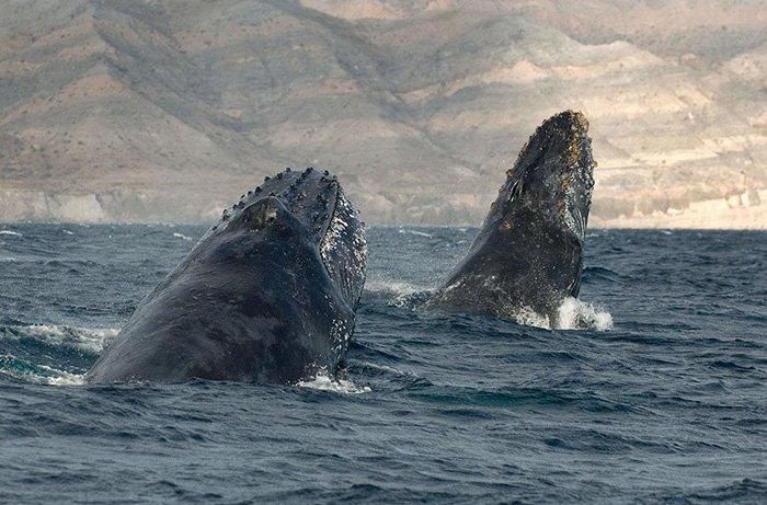 Красота дельфинов и китов от Кристофера Суонна