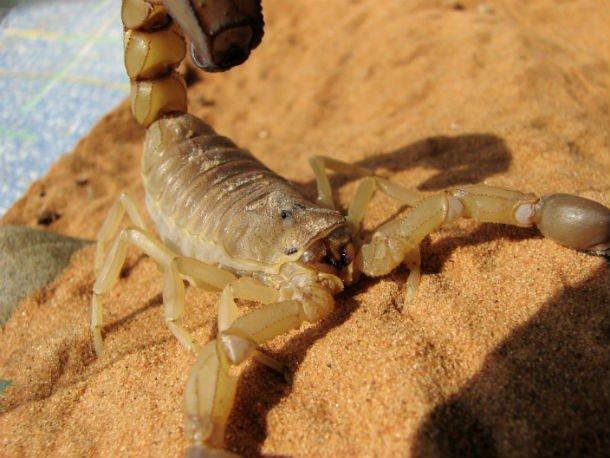 Самые разрушительные маленькие существа на планете