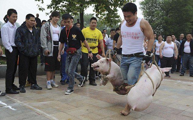 Китайские богатыри соревнуются в перетаскивании свиней