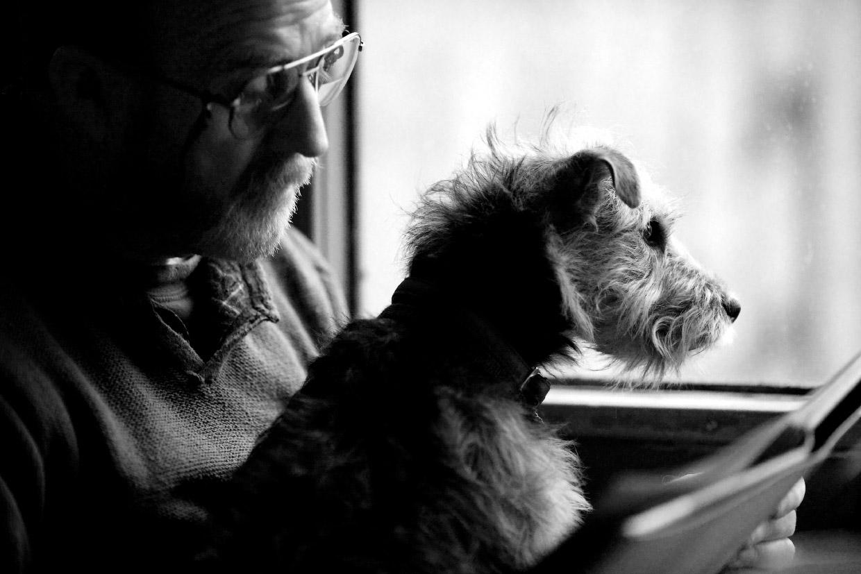 Работы с конкурса собачьей фотографии Kennel Club Dog Photographer 2016