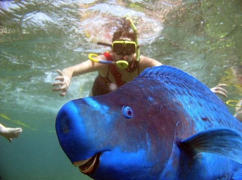 Редкие и удивительные животные со всего мира