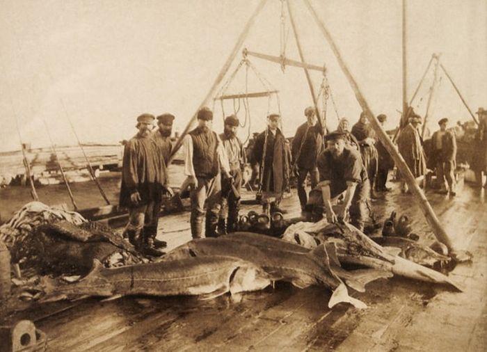 Старые фото русских рыбаков и их улова
