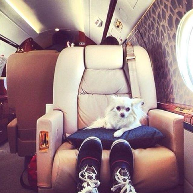 Богатенькие собачки Лондона, которые живут лучше тебя