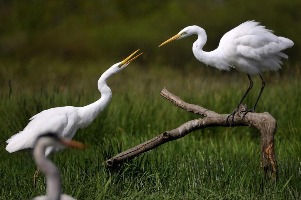 Птицы — потомки динозавров