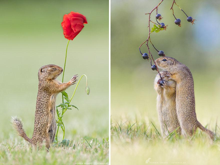 Суслики - очаровательные и умилительные создания
