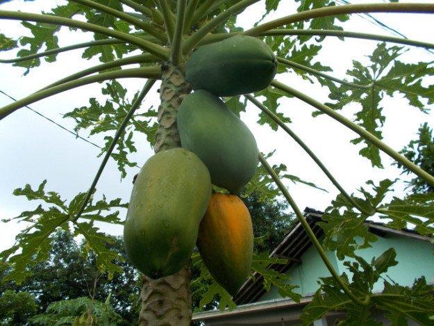 Как любимые нами плоды выглядят на грядках