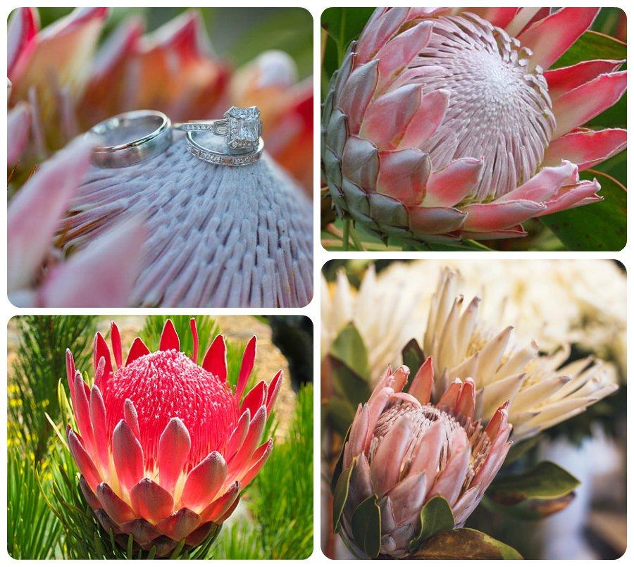 5 удивительно красивых тропических цветов