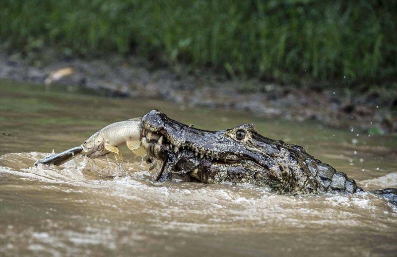 Охота на охотника в дикой природе