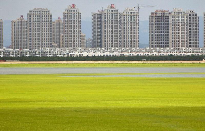 Тонны водорослей не мешают китайцам отдыхать