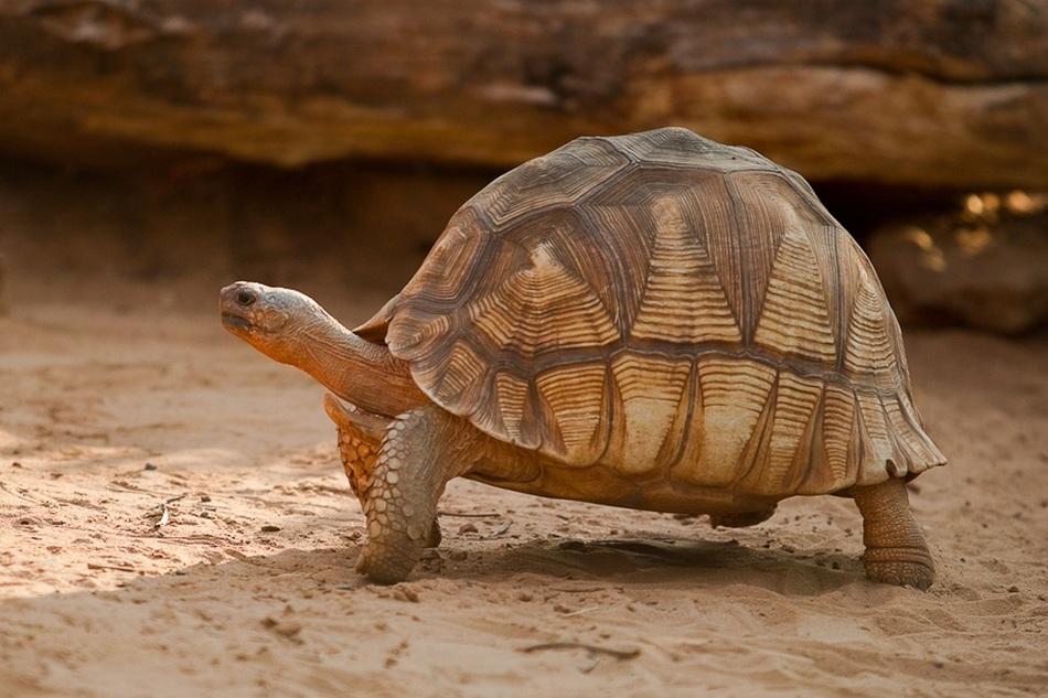15 особо редких животных, которых может не стать до 2020 года