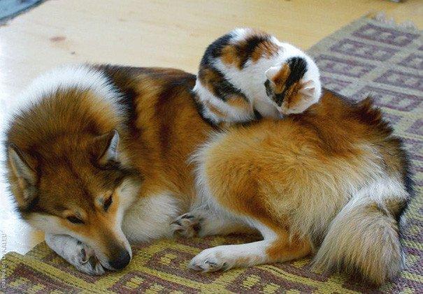 Такие разные животные, а так похожи