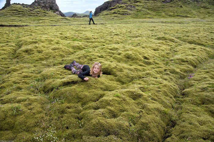 Удивительный исландский мох