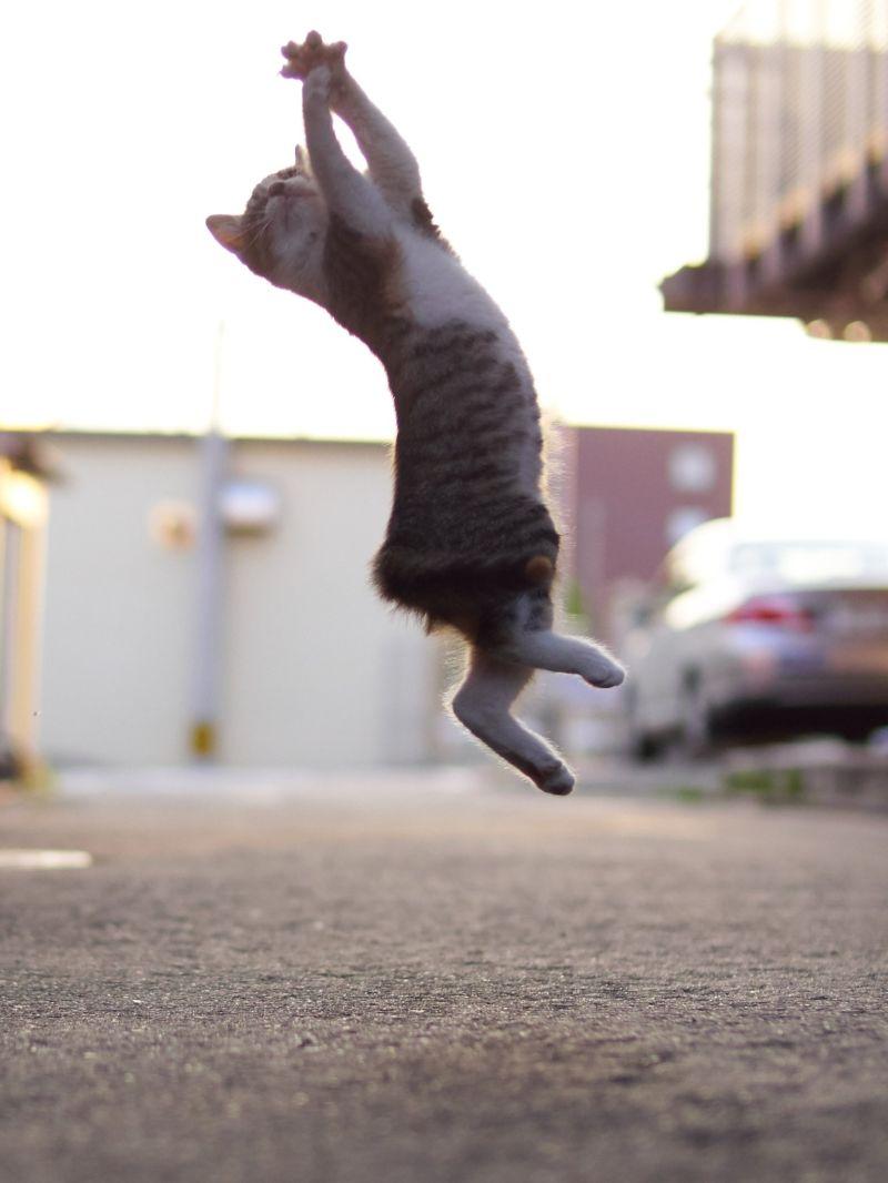 Уличные коты осваивают искусство кунг-фу