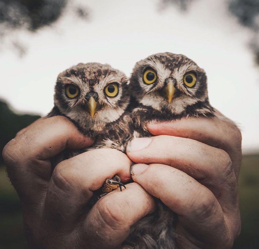 Животные с близкого расстояния от фотографа Консты Пункка