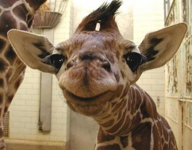Очаровательные улыбающиеся животные, которые заряжают позитивом