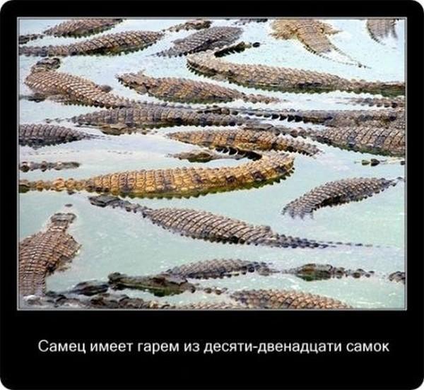 Занимательные факты о крокодилах