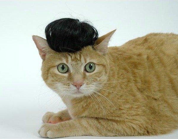 Необычные и забавные вещицы для кошек