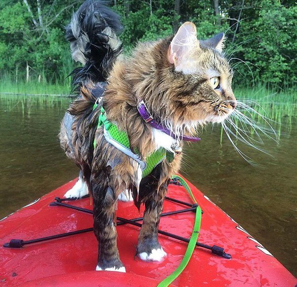 В поход вместе с кошкой из Instagram