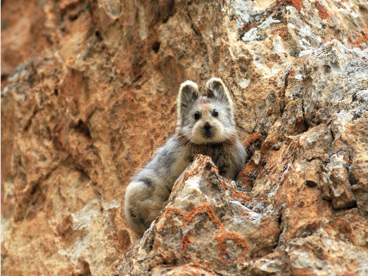 10 редких животных на грани вымирания