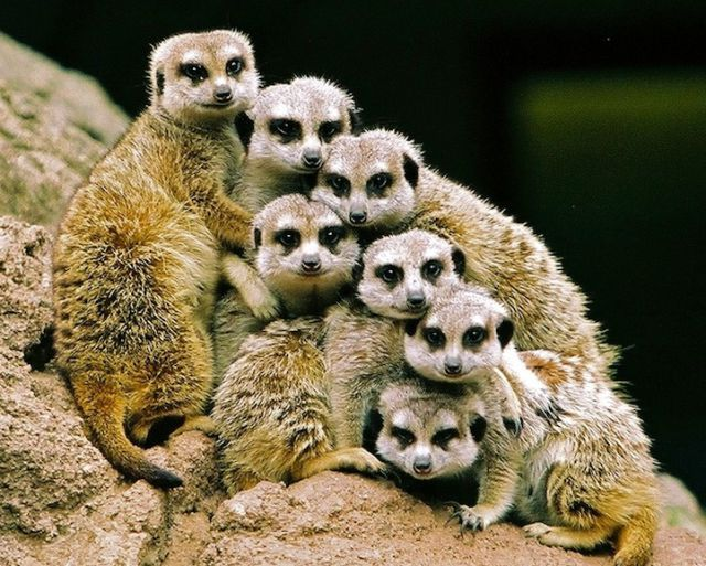 Милые животные на фотографиях