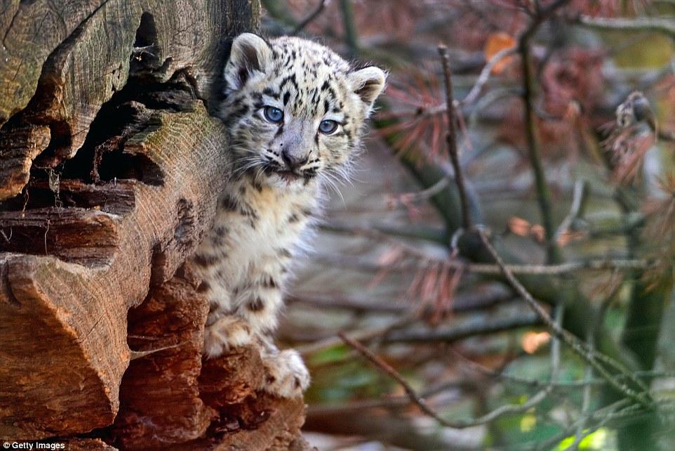 Где обитают самые милые детёныши животных в мире