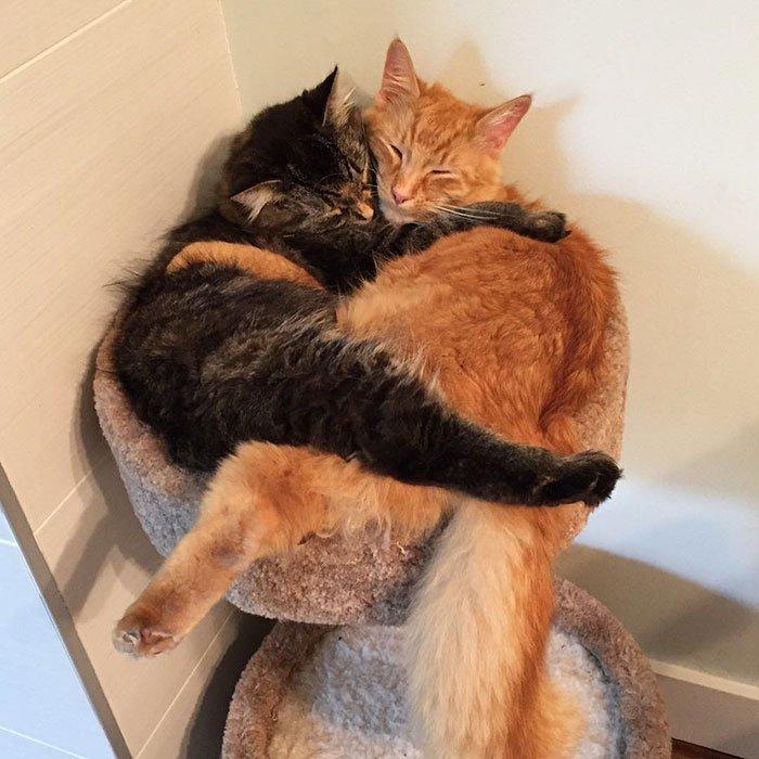 Неразлучные Лили и Ренли выросли из своей кровати, но продолжают спать в ней вместе