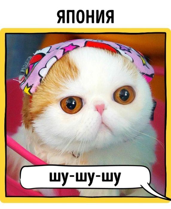 Как подзывают кошек жители разных стран