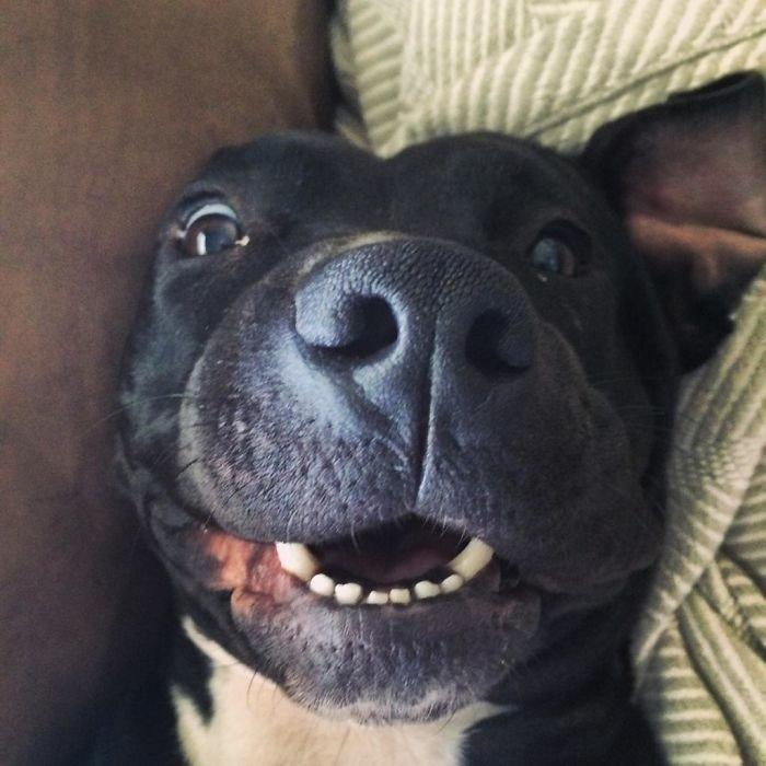Счастливые собаки, которых приняли в семью
