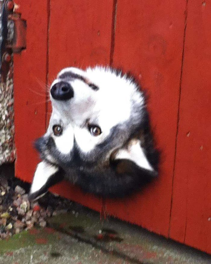 20 любопытных собак, которые просто захотели поздороваться