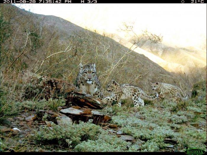 Интересные снимки животных, сделанные фотоловушками