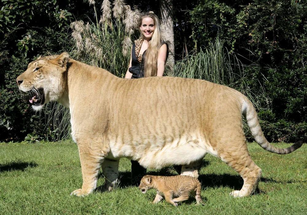 Самые большие среди животных