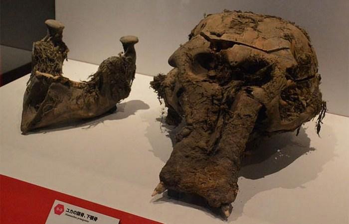 Останки вымерших животных, которые отлично сохранились
