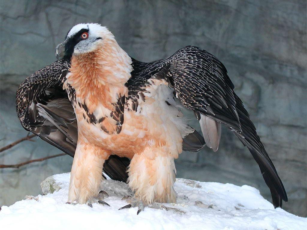 10 самых больших птиц на земле
