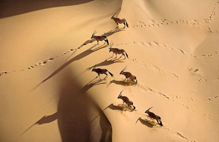 Дикая природа Африки с высоты птичьего полета