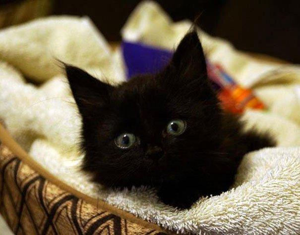 Максимально милые котята