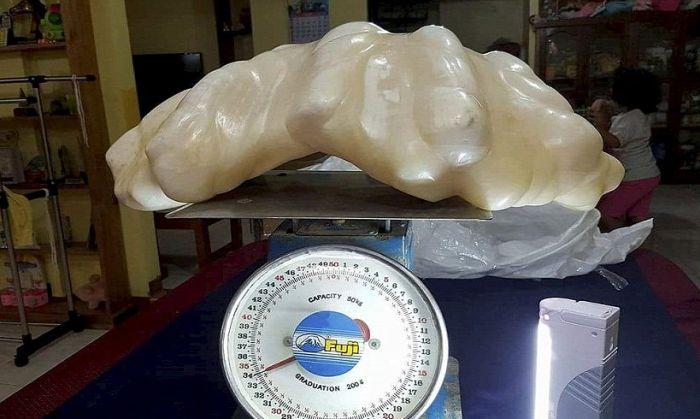 Гигантская жемчужина 10 лет пролежала под кроватью рыбака