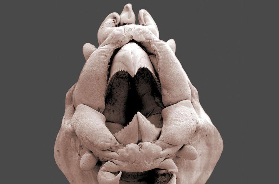 8 микрофото чудищ, обитающих в морских глубинах