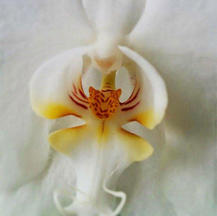 Бутоны цветов причудливой формы