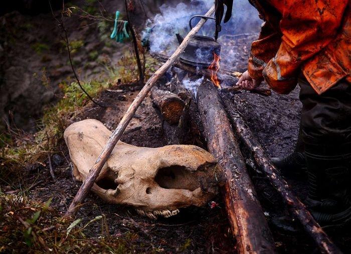 Черные археологи в поисках бивней мамонта