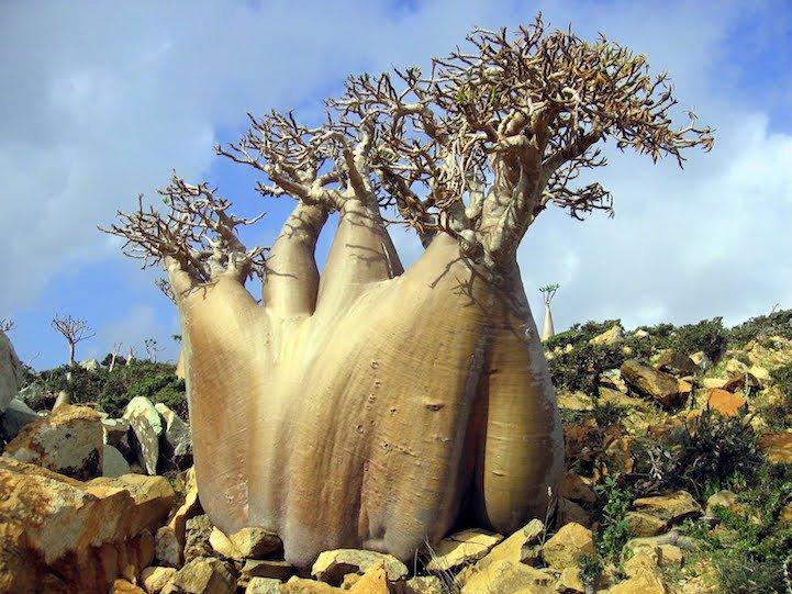 Невероятная природа острова Сокотра