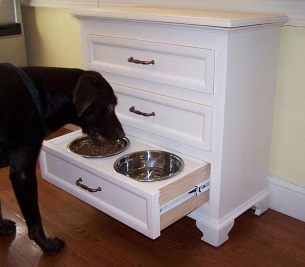 Прикольные штуки, придуманные владельцами собак