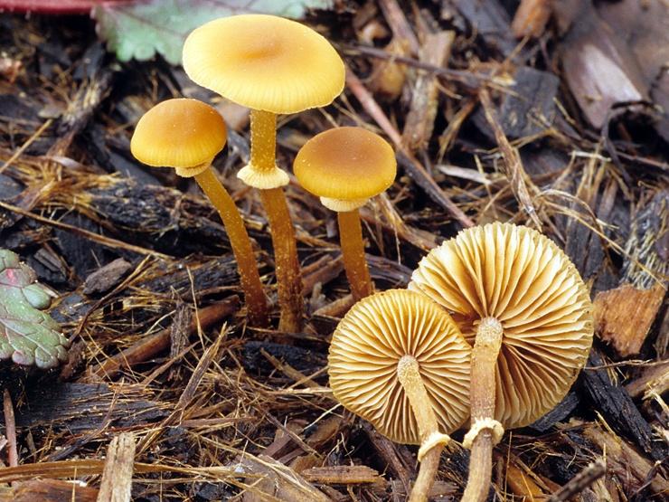 Самые опасные и ядовитые грибы