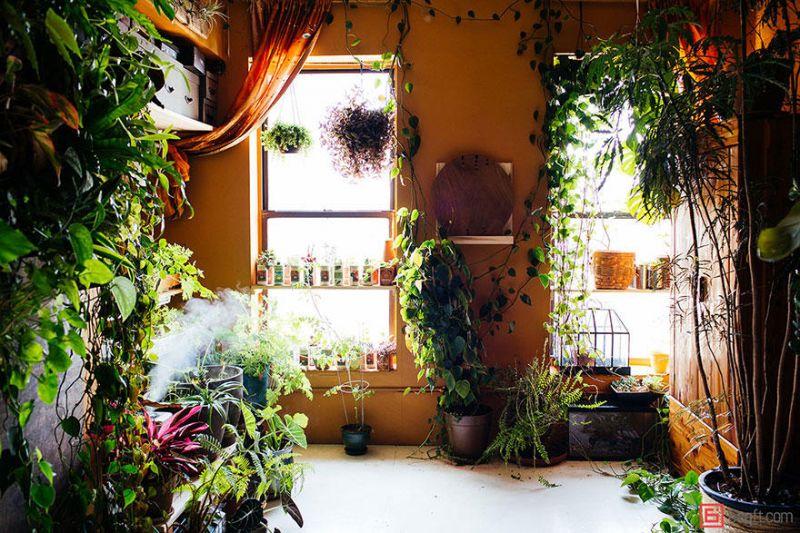 500 растений в квартире