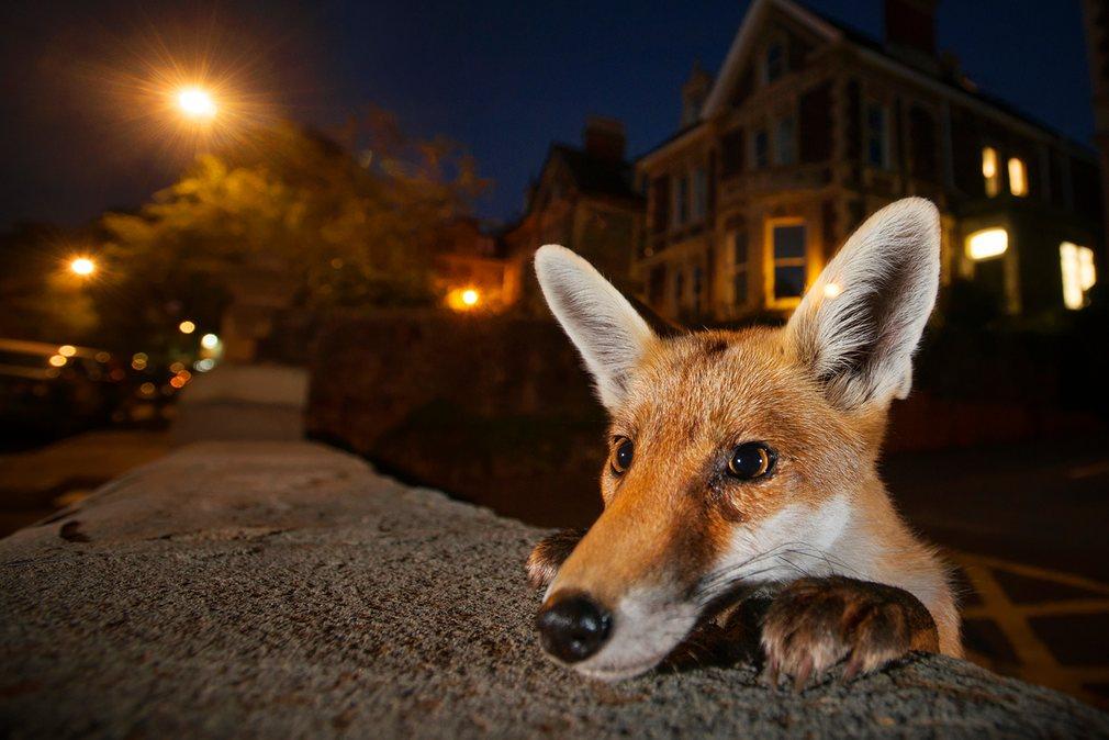 Финалисты фотоконкурса Wildlife Photographer of the Year 2016