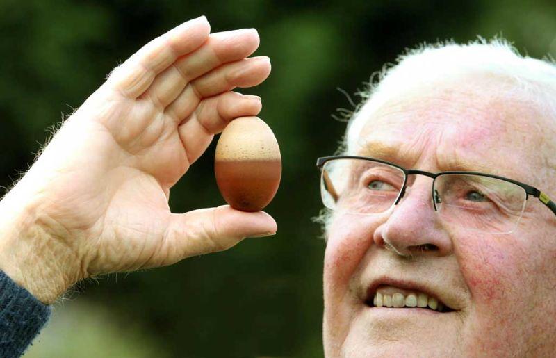 Курочка снесла фермеру двухцветное яйцо