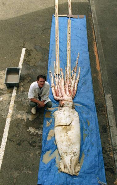 Чудовищные обитатели из глубин океана