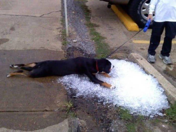 Исчерпывающий фотоотчет по борьбе с жарой