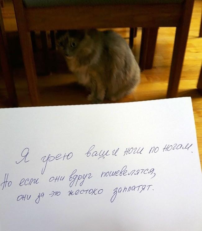 15 причин понять и простить этих котов