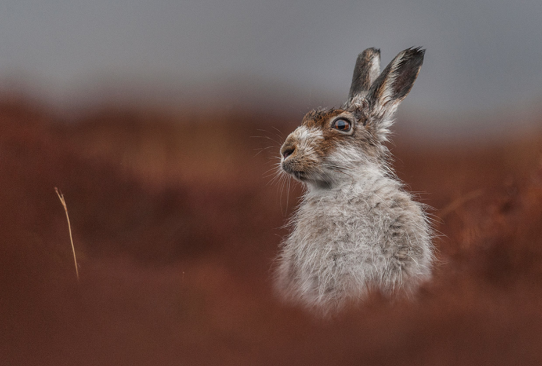 Победители конкурса фотографий дикой природы Wildlife Photographer of the Year 2016