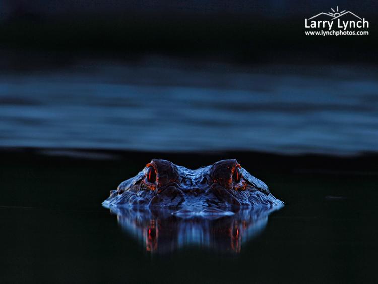 Фото, сделанные на болоте после заката солнца